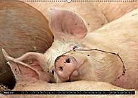 Der Schweinekalender (Wandkalender 2019 DIN A2 quer) - Produktdetailbild 3