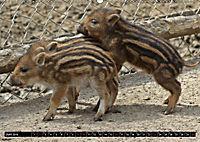 Der Schweinekalender (Wandkalender 2019 DIN A2 quer) - Produktdetailbild 6