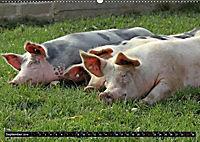 Der Schweinekalender (Wandkalender 2019 DIN A2 quer) - Produktdetailbild 9