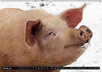 Der Schweinekalender (Wandkalender 2019 DIN A2 quer) - Produktdetailbild 1