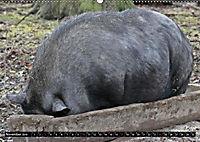 Der Schweinekalender (Wandkalender 2019 DIN A2 quer) - Produktdetailbild 11