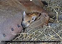 Der Schweinekalender (Wandkalender 2019 DIN A2 quer) - Produktdetailbild 7