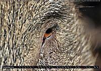 Der Schweinekalender (Wandkalender 2019 DIN A2 quer) - Produktdetailbild 12