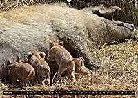 Der Schweinekalender (Wandkalender 2019 DIN A2 quer) - Produktdetailbild 5