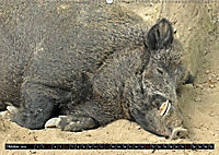 Der Schweinekalender (Wandkalender 2019 DIN A2 quer) - Produktdetailbild 10