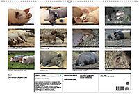 Der Schweinekalender (Wandkalender 2019 DIN A2 quer) - Produktdetailbild 13