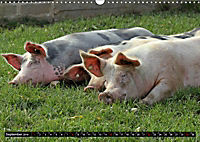 Der Schweinekalender (Wandkalender 2019 DIN A3 quer) - Produktdetailbild 9