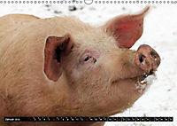 Der Schweinekalender (Wandkalender 2019 DIN A3 quer) - Produktdetailbild 1