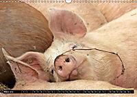Der Schweinekalender (Wandkalender 2019 DIN A3 quer) - Produktdetailbild 3