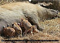 Der Schweinekalender (Wandkalender 2019 DIN A3 quer) - Produktdetailbild 5