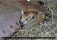 Der Schweinekalender (Wandkalender 2019 DIN A3 quer) - Produktdetailbild 7