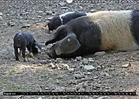 Der Schweinekalender (Wandkalender 2019 DIN A3 quer) - Produktdetailbild 8