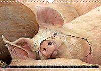 Der Schweinekalender (Wandkalender 2019 DIN A4 quer) - Produktdetailbild 3