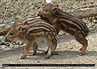 Der Schweinekalender (Wandkalender 2019 DIN A4 quer) - Produktdetailbild 6