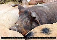 Der Schweinekalender (Wandkalender 2019 DIN A4 quer) - Produktdetailbild 2
