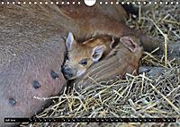Der Schweinekalender (Wandkalender 2019 DIN A4 quer) - Produktdetailbild 7
