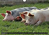 Der Schweinekalender (Wandkalender 2019 DIN A4 quer) - Produktdetailbild 9