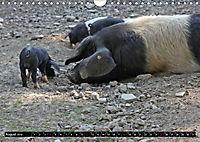 Der Schweinekalender (Wandkalender 2019 DIN A4 quer) - Produktdetailbild 8