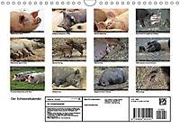 Der Schweinekalender (Wandkalender 2019 DIN A4 quer) - Produktdetailbild 13