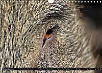 Der Schweinekalender (Wandkalender 2019 DIN A4 quer) - Produktdetailbild 12
