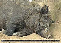 Der Schweinekalender (Wandkalender 2019 DIN A4 quer) - Produktdetailbild 10