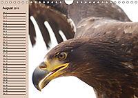 Der Steinadler. Majestätischer Greifvogel (Wandkalender 2019 DIN A4 quer) - Produktdetailbild 8