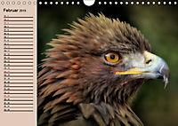 Der Steinadler. Majestätischer Greifvogel (Wandkalender 2019 DIN A4 quer) - Produktdetailbild 2