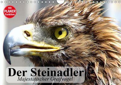 Der Steinadler. Majestätischer Greifvogel (Wandkalender 2019 DIN A4 quer), Elisabeth Stanzer