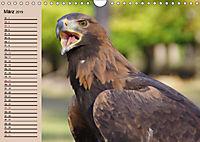 Der Steinadler. Majestätischer Greifvogel (Wandkalender 2019 DIN A4 quer) - Produktdetailbild 3