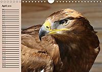 Der Steinadler. Majestätischer Greifvogel (Wandkalender 2019 DIN A4 quer) - Produktdetailbild 4