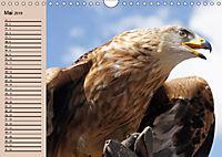 Der Steinadler. Majestätischer Greifvogel (Wandkalender 2019 DIN A4 quer) - Produktdetailbild 5