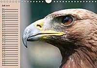 Der Steinadler. Majestätischer Greifvogel (Wandkalender 2019 DIN A4 quer) - Produktdetailbild 7