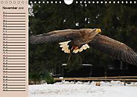 Der Steinadler. Majestätischer Greifvogel (Wandkalender 2019 DIN A4 quer) - Produktdetailbild 11