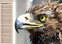 Der Steinadler. Majestätischer Greifvogel (Wandkalender 2019 DIN A4 quer) - Produktdetailbild 12
