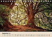 Der Wald. Durch zauberhafte Waldlandschaften (Tischkalender 2019 DIN A5 quer) - Produktdetailbild 9