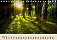 Der Wald. Durch zauberhafte Waldlandschaften (Tischkalender 2019 DIN A5 quer) - Produktdetailbild 7