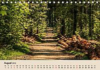 Der Wald. Durch zauberhafte Waldlandschaften (Tischkalender 2019 DIN A5 quer) - Produktdetailbild 8