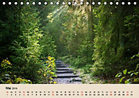 Der Wald. Durch zauberhafte Waldlandschaften (Tischkalender 2019 DIN A5 quer) - Produktdetailbild 5