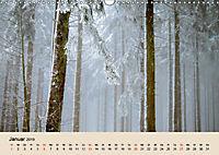 Der Wald. Durch zauberhafte Waldlandschaften (Wandkalender 2019 DIN A3 quer) - Produktdetailbild 1