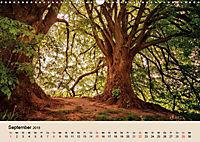 Der Wald. Durch zauberhafte Waldlandschaften (Wandkalender 2019 DIN A3 quer) - Produktdetailbild 9