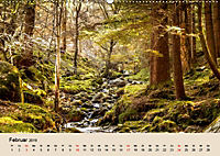 Der Wald. Durch zauberhafte Waldlandschaften (Wandkalender 2019 DIN A2 quer) - Produktdetailbild 2