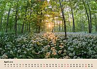 Der Wald. Durch zauberhafte Waldlandschaften (Wandkalender 2019 DIN A2 quer) - Produktdetailbild 4