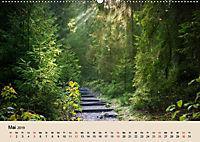 Der Wald. Durch zauberhafte Waldlandschaften (Wandkalender 2019 DIN A2 quer) - Produktdetailbild 5