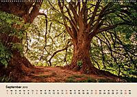 Der Wald. Durch zauberhafte Waldlandschaften (Wandkalender 2019 DIN A2 quer) - Produktdetailbild 9
