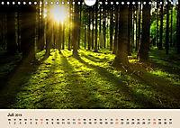 Der Wald. Durch zauberhafte Waldlandschaften (Wandkalender 2019 DIN A4 quer) - Produktdetailbild 7