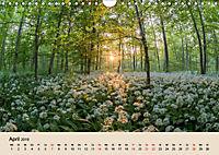 Der Wald. Durch zauberhafte Waldlandschaften (Wandkalender 2019 DIN A4 quer) - Produktdetailbild 4