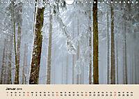 Der Wald. Durch zauberhafte Waldlandschaften (Wandkalender 2019 DIN A4 quer) - Produktdetailbild 1