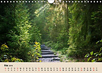 Der Wald. Durch zauberhafte Waldlandschaften (Wandkalender 2019 DIN A4 quer) - Produktdetailbild 5