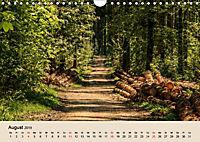 Der Wald. Durch zauberhafte Waldlandschaften (Wandkalender 2019 DIN A4 quer) - Produktdetailbild 8