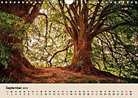 Der Wald. Durch zauberhafte Waldlandschaften (Wandkalender 2019 DIN A4 quer) - Produktdetailbild 9